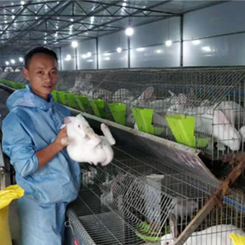 兔子养殖公司