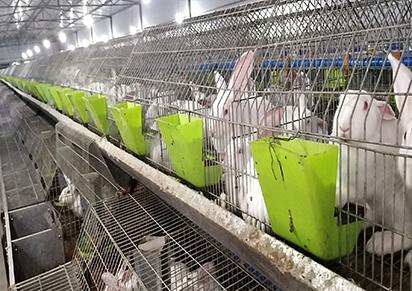 四川兔子养殖销售市场价格【种兔养殖】