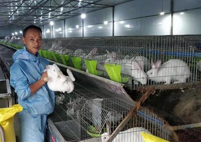 四川兔子养殖的的成本费与盈利测算