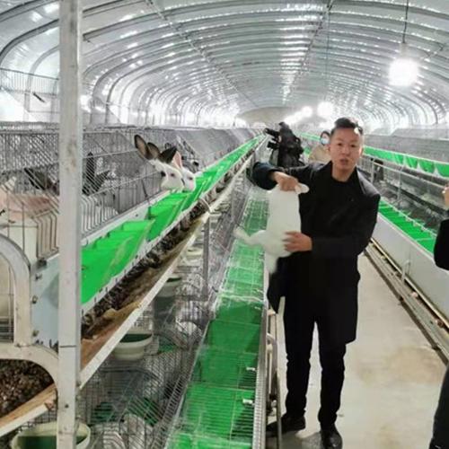 四川野兔养殖