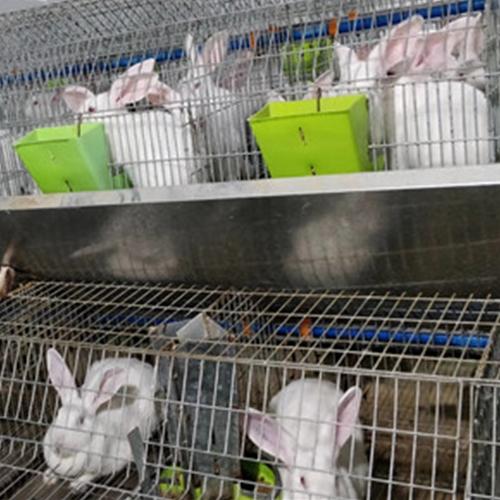 四川兔子养殖
